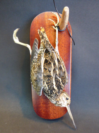 Adrian Johnstone, Professional Taxidermist since 1981. Supplier to private collectors, schools, museums, businesses and the entertainment world. Taxidermy is highly collectable. A taxidermy stuffed Snipe (9492), in excellent condition.