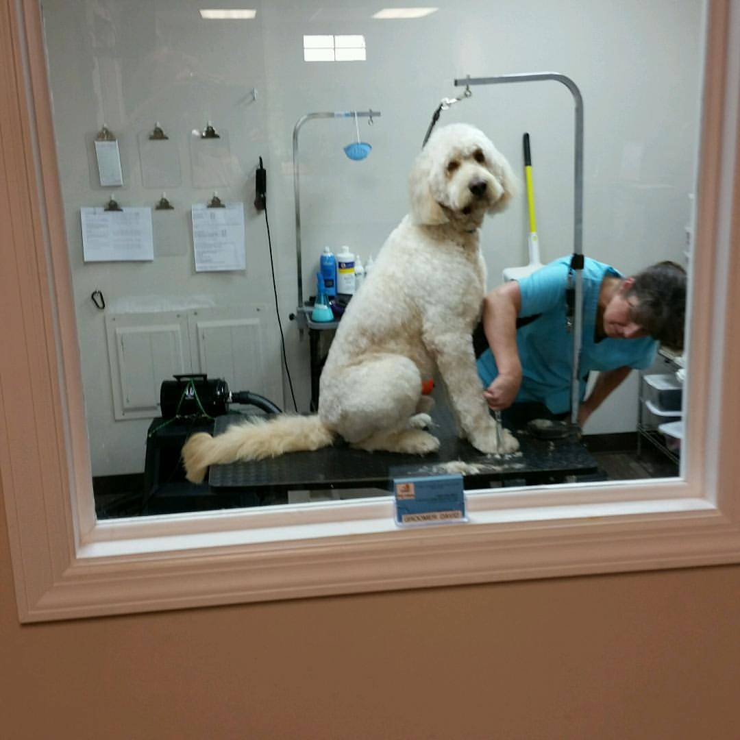 Tubbs dog wash in somers point nj voted best pet care solutioingenieria Images