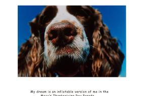 Captioned images of Springer Spaniels in the personality of Dorothy Parker and Robert Benchley