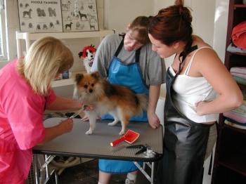 Bettys pet grooming school llc online solutioingenieria Image collections