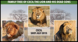 Cecil the Lion's Son has been shot and killed.