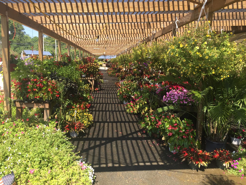 Flowers, Mulch - John Redmond - Shamong, Nj