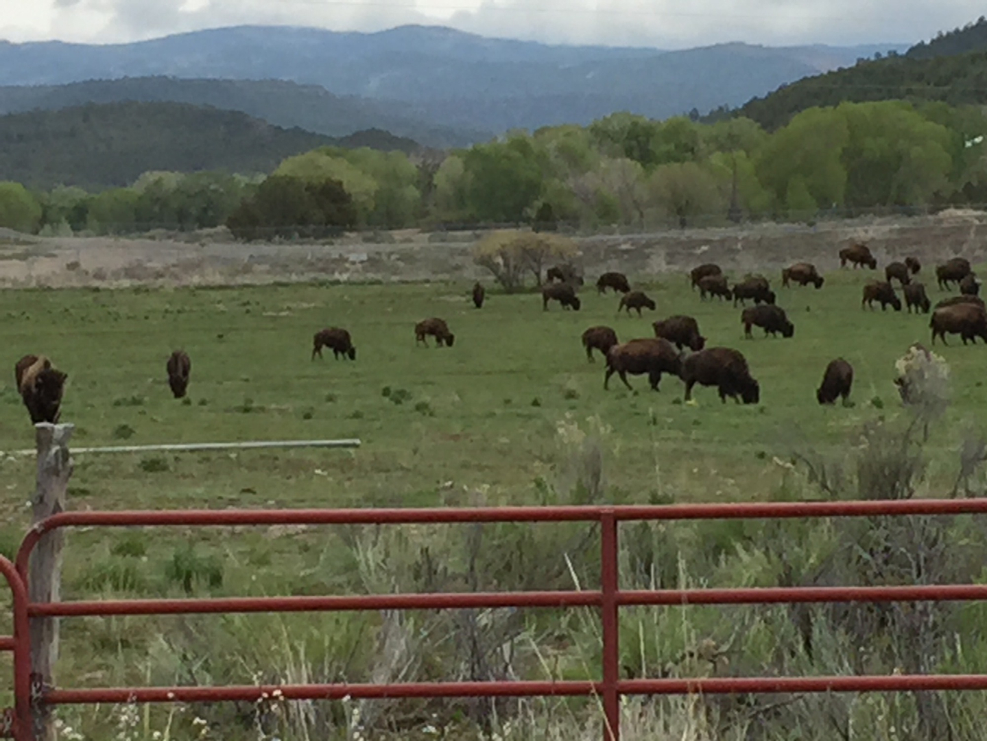 New mexico taos county penasco - Po Box 127 Pueblo View State Road 75 Penasco New Mexico 87553 Tribalsecretary Picurispueblo Org