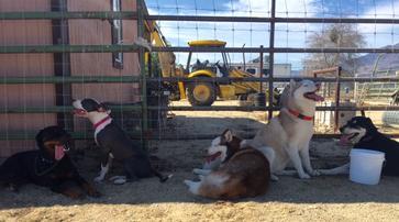 Dusty Trails Dog Training