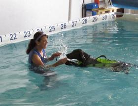 dog swimming with instructor
