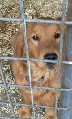 How to Avoid Puppy Mills Including This One!