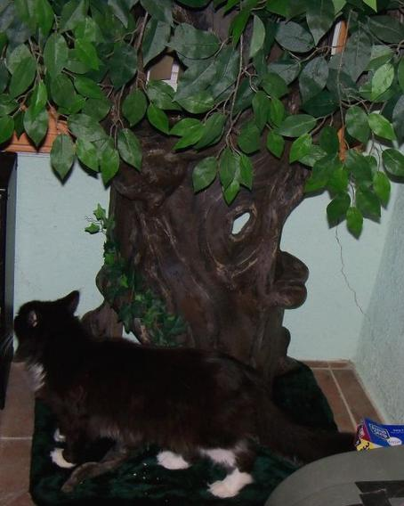 Hidden Hollow Cat Tree