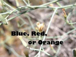 Link to Blue Red and Orange Flowers at Cedars page.