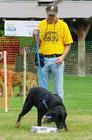 dog training, dog trainer, nosework, dog training vancouver, dog trainer vancouver, dog trainer new west
