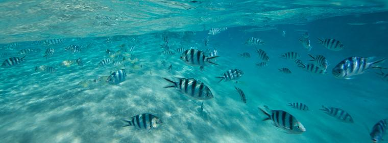 Cook Islands - picture, images of fish in the lagoon
