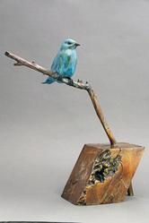 Mountain Bluebird sitting on a branch