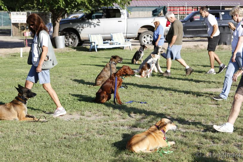 Hillside Canine Group Dog Training Class