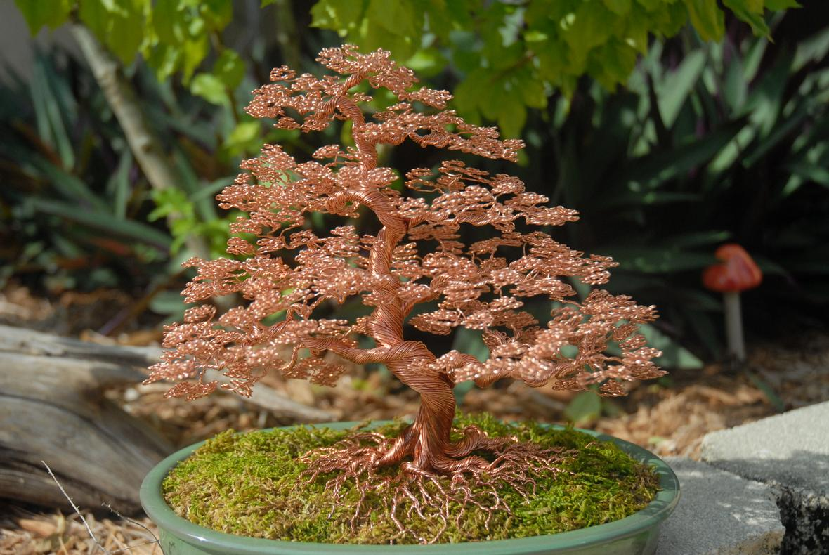 Wire Bonsai Wiring A Trees Check Back For New Items