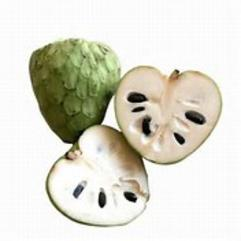 Atemoya Annona Squamosa X Cherimoya Fruit Tree Davie Florida