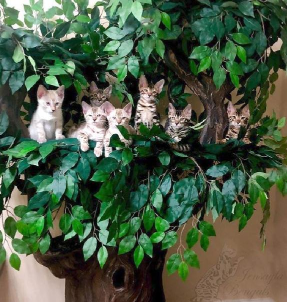 Cat Trees for Multiple Cats