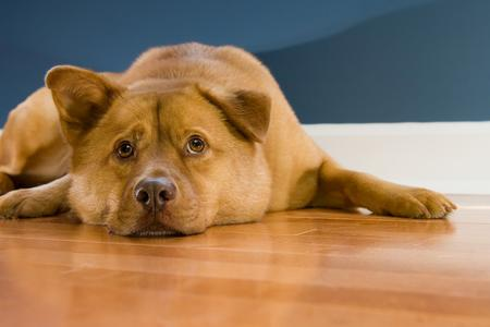 dog proof hardwood flooring