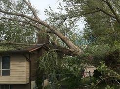 arborist, arbor, tree, removal, pruning, emergency