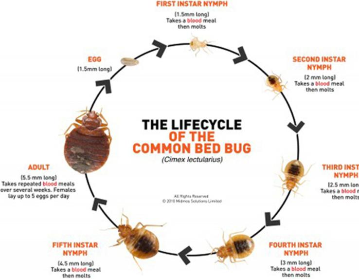 competitive price 05459 74dcc MSNBC Bedbugs — wingless insects that feed on the blood of sleeping  animals — invaded stores of Abercrombie  Fitch Co., Victorias Secret and  Nike Inc.s ...