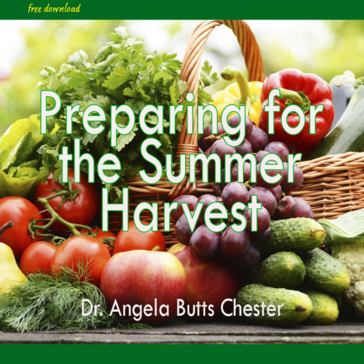 Summer Harvest 2 minute meditation Dr Angela Chester