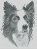 Cross Stitch Chart / pattern of a Border Collie
