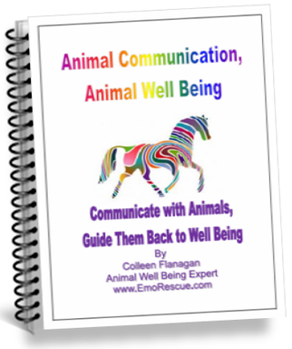 Free Animal Communication Book for Subscribers!