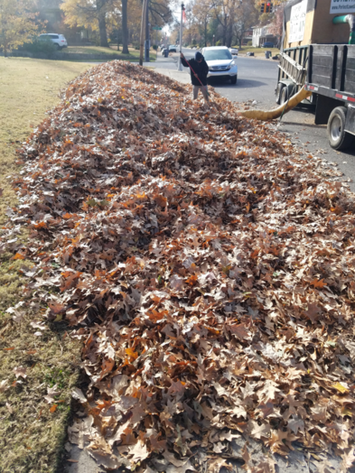 Leaf Removal Midtown Memphis TN