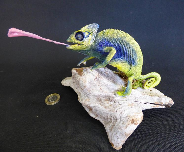 Adrian Johnstone, Professional Taxidermist since 1981. Supplier to private collectors, schools, museums, businesses and the entertainment world. Taxidermy is highly collectible. A taxidermy stuffed Chameleon (50), in excellent condition.