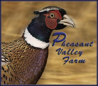 Hunting, Pheasant - Pheasant Valley Farm - Reading, Pa