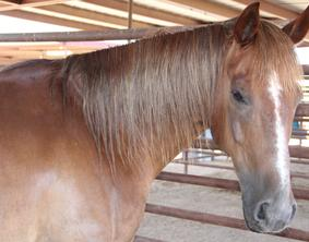 Horse Boarding And Leasing, Dogs For Adoption - Vj Ranch - Phoenix, Az