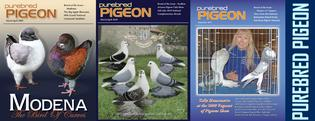 Purebred Pigeon the best and only pigeon magazine in the country