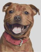 Cross Stitch Chart of a Staffordshire Bull Terrier
