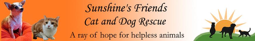 Sunshine's Friends Cat and Dog Rescue - a ray of hope for helpless animals