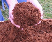 Hands holding up compost