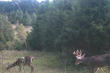 bucks chasing does