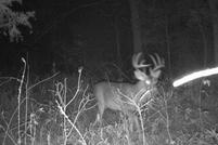 Kentucky Trophy Deer Hunting