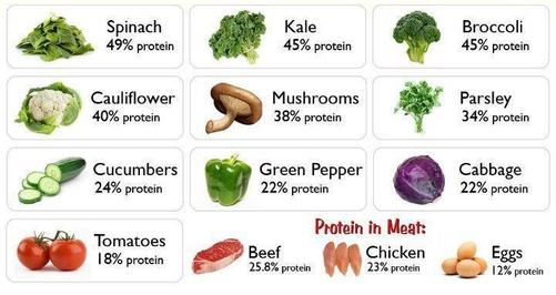 Sample and Percentage of Plant-based Protein food choices
