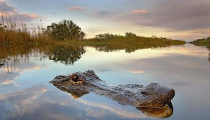 Everglades Adventure Photo Workshop