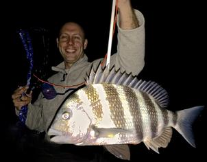 Bowfishing for Large Sheepshead