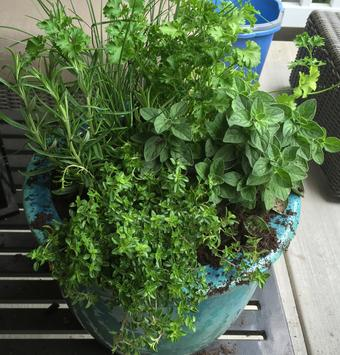 arrange herbs for spill and thrill