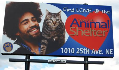 Billboards by CAT Graphics
