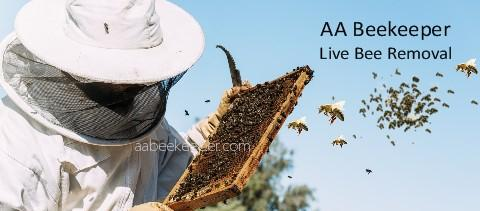 Indio Bee Removal