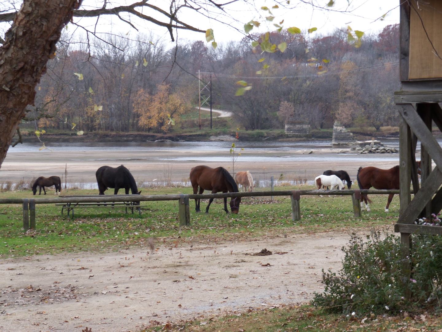Horseback Riding in Iowa - Home - Cedar Valley Stables
