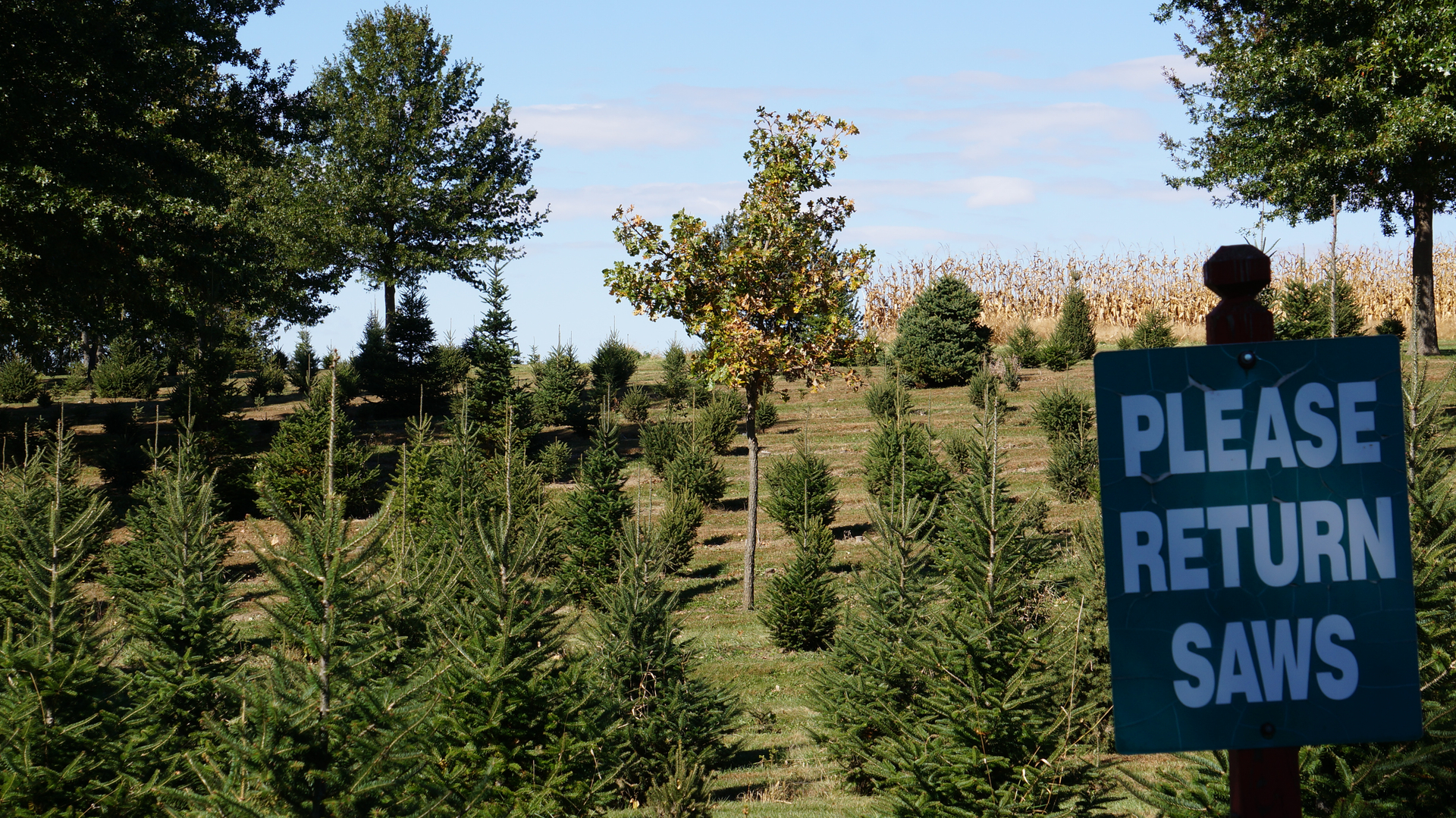 Chicagoland, Illinois Christmas Tree Farms: Choose-and-cut