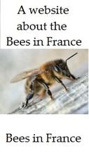 All-about-the-bees-in-France