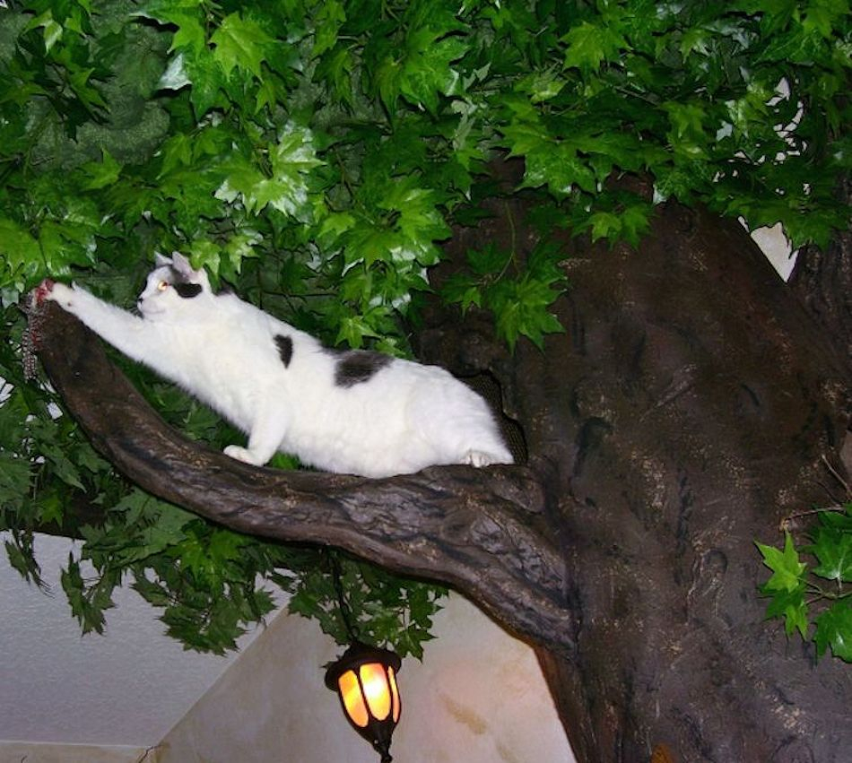 a fantasy forest luxury cat trees fantasy cat trees that look