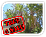 Homeowners sell your palm trees