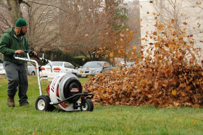 FAST LEAF REMOVAL SERVICES EDINBURG MCALLEN TEXAS