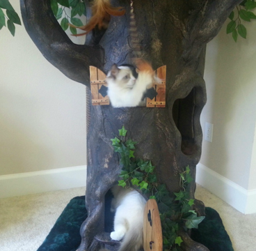 Hollow Wood Cat Trees