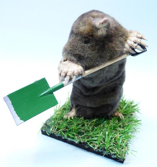 Adrian Johnstone, professional Taxidermist since 1981. Supplier to private collectors, schools, museums, businesses, and the entertainment world. Taxidermy is highly collectable. A taxidermy stuffed Gardening Mole With A Spade, in excellent condition.