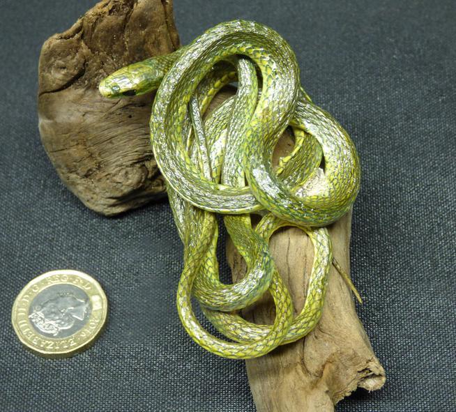 Adrian Johnstone, professional Taxidermist since 1981. Supplier to private collectors, schools, museums, businesses, and the entertainment world. Taxidermy is highly collectable. A taxidermy stuffed Green Snake (112), in excellent condition.